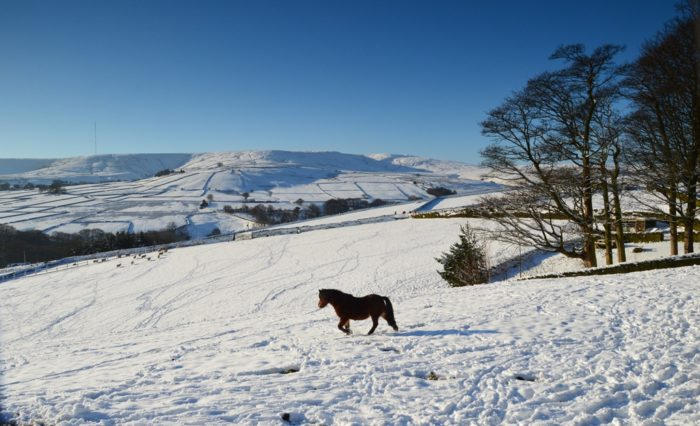 Horse beneath snow covered Holme Moss