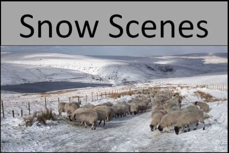 link to snow scene images