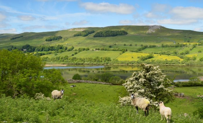 Semer Water in the Yorkshire Dales and may blossom